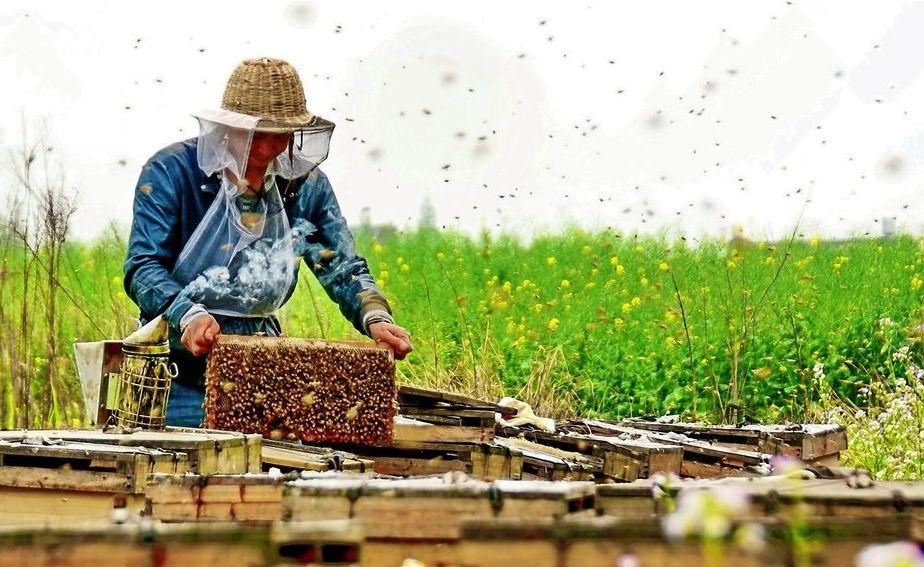 蜂蜜美国反倾销马来西亚转口贸易解决案例2011